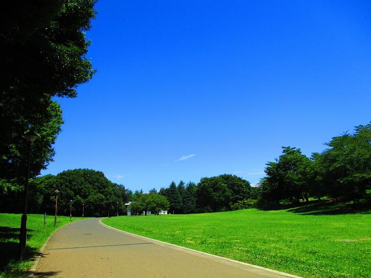 光が丘公園の写真