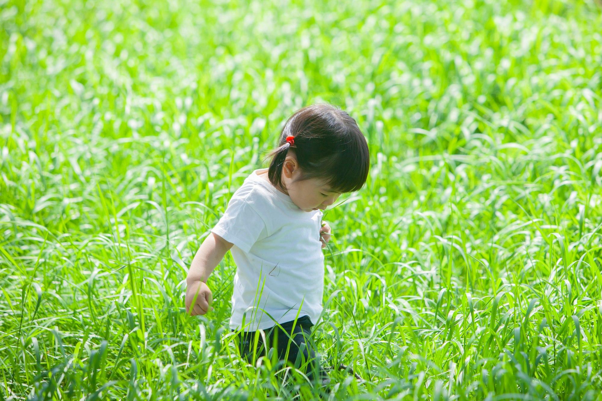 光が丘公園昆虫原っぱにいる子供の写真